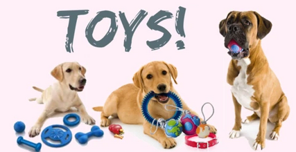 Choosing the Best Toys for your Dog
